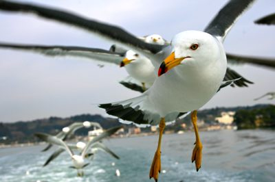 Bird feeding in Matsushima Bay