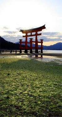 Low tide at Miyajima torii, shrine